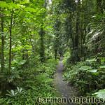 07 Viajefilos en Australia. Dorrigo Rainforest NP 11