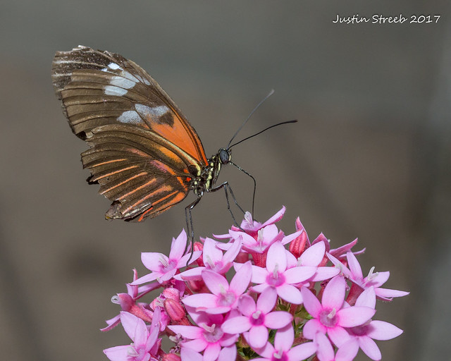 Brookside Gardens Butterfly 16