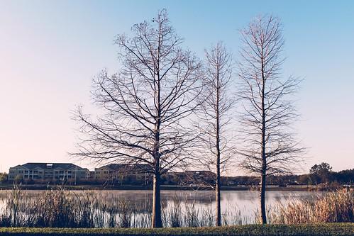 Three Trees | by Will Hucks