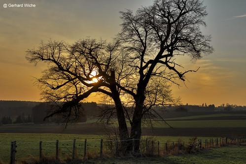 sonne sun sonnenuntergang sunset tree natur nature baum landschaft