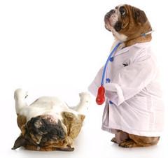 Kisállatgyógyászati asszisztens képzés