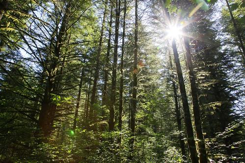 tree digital sunrise canon eos washington tall ef24105mmf4lisusm andersonlodge 5dmarkii