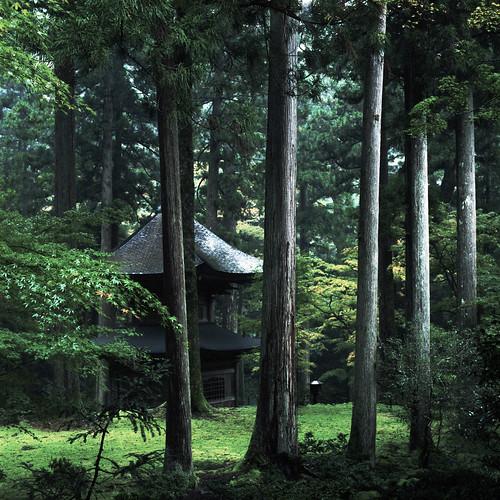 film rain temple moss kodak hasselblad portra cf planar 福井 160 80mm carlzeiss eiheiji 苔 雨 6×6 永平寺 503cxi 報恩塔