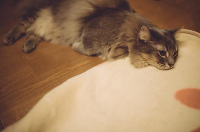 milo/床暖房