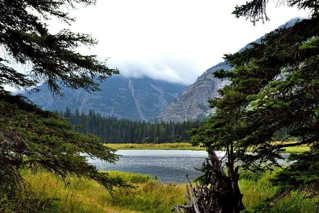 A View of Kootenei Lakes through the Trees (Glacier National Park)