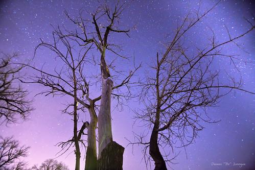 blue trees winter sky nature night canon stars landscape colorado seasons purple nighttime astrophotography astrology jamesinsogna