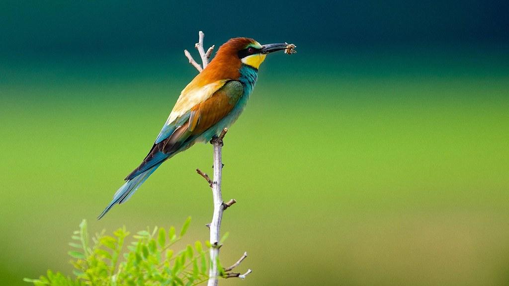 Desktop Birds Wide Hd Wallpaper Free Download Desktop Bird Flickr