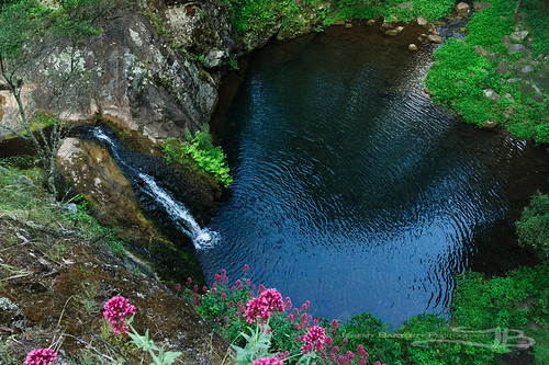 flower water forest river landscape landscapes waterfall outdoor au naturallight australia newsouthwales jenolan jenolancaves naturesetting