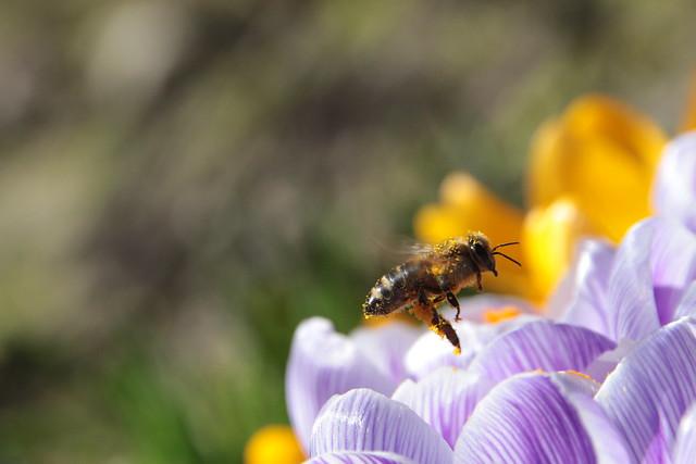 ....im Pollenrausch