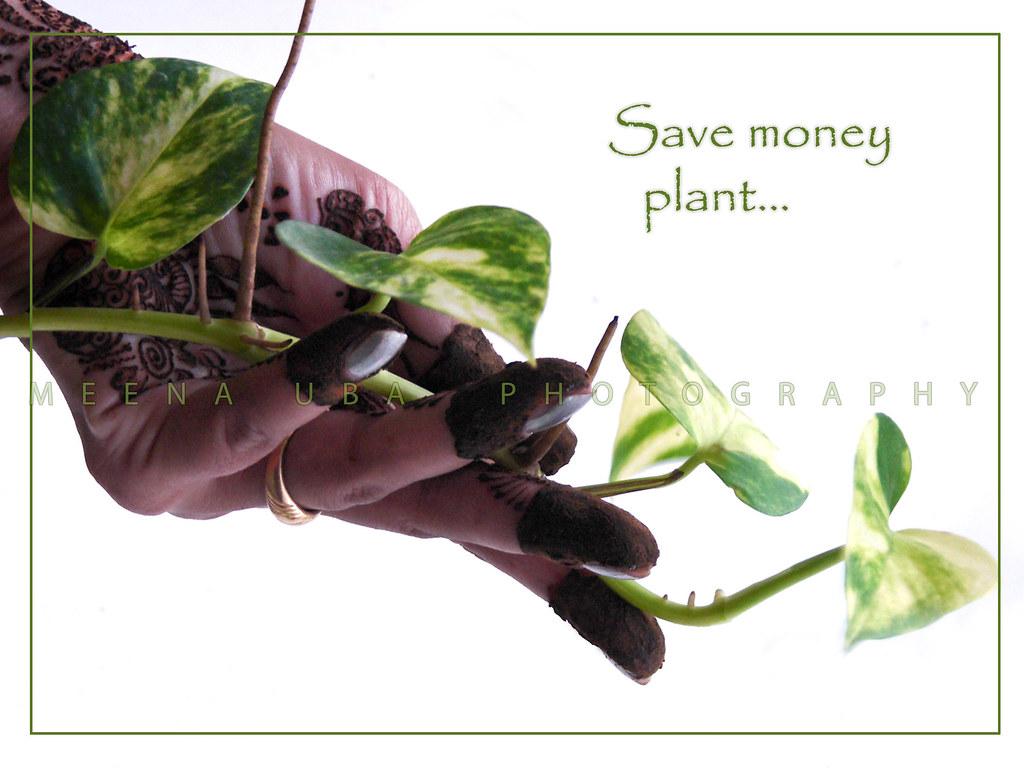 SAVE MONEY PLANT