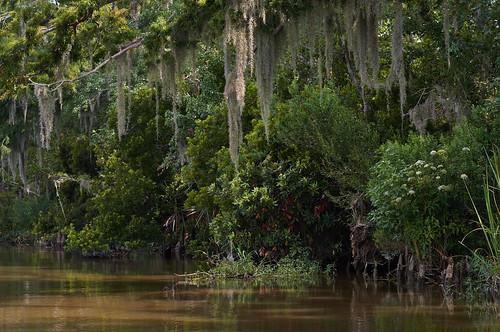 slidell louisiana delta swamp spanishmoss wetlands pearlriver cypresstree honeyisland deerisland alluvial westmiddleriver
