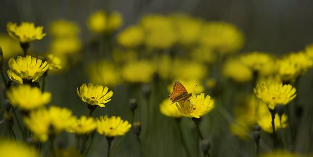 Fiori e farfalle 3