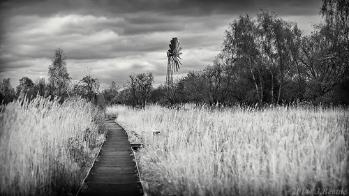 blackandwhite bw reeds path boardwalk cambridgeshire fenland windpump cycleride wickenfen sedgefen