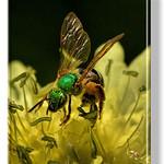 Green Bee Wings