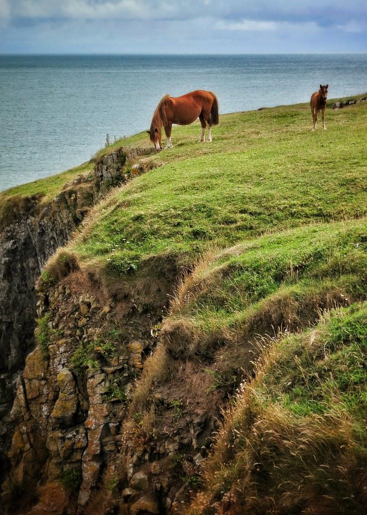 Along the Pembrokeshire Coastal Path near Barafundle Bay, Wales