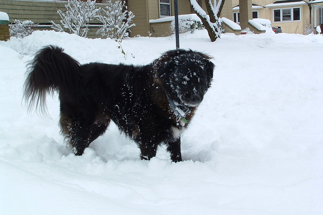 Loved the snow