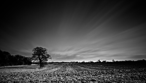 Tree In Ploughed Field | by Richard Walker Photography
