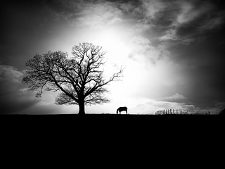Black and White Landscape with Horse | by Fodagrafs