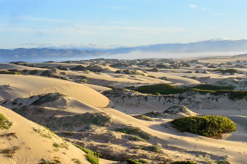 ocean california ca morning blue sun moon white lake cold reflection green beach nature water yellow cali sunrise reeds gold golden coast early photo sand nikon photographer pacific dunes central clear hour guadalupe centralcoast pismo marinelayer osoflaco d3200