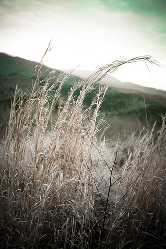 plant landscape showcase