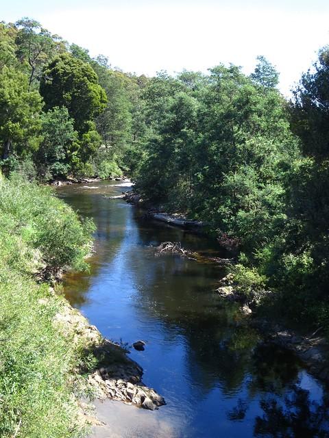 2013-12-29 Branxholm 1 - Ringarooma River upstream