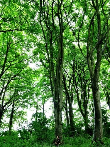 Park Wood, Wells   by William Parsons Pilgrim