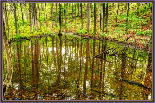 park reflection green nature contrast forest canon scott eos pond woods natural state michigan holly 7d fusion fenton elliott moraine wetland treereflection smithson fused reflectionpond photomatix michiganstateparks michiganstatepark reflectedtree glacialmoraine michiganwoods sevenlakesstatepark reflectedtrees michigannature michiganwetlands eos7d canoneos7d dtwpuck scottsmithson scottelliottsmithson littlesevenlake bigsevenlake