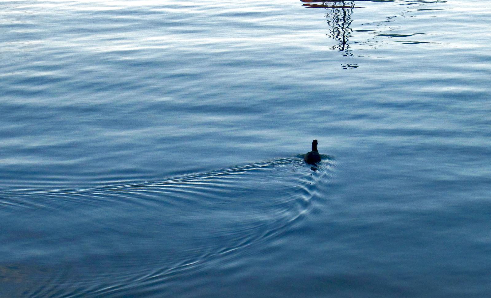Lago Atitlan 117