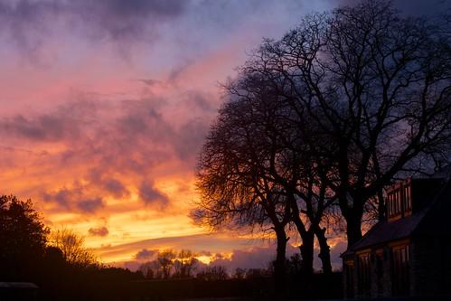 trees winter sunset sky tree night tramonto cloudy cielo pwwinter