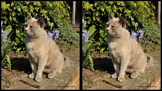 Cat on a wall - 3d parallel view