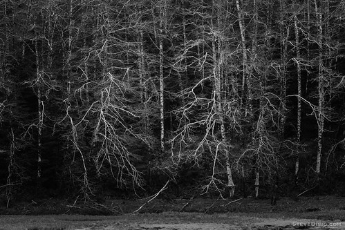 trees blackandwhite usa monochrome forest river spring woods unitedstates northwest estuary pacificnorthwest northamerica willapa