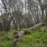 02 Viajefilos en Australia. Barrington NP 21