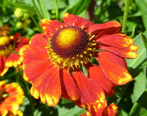 IMG_2476 | by labbradolci (Save the Monarchs, Plant Milkweed))