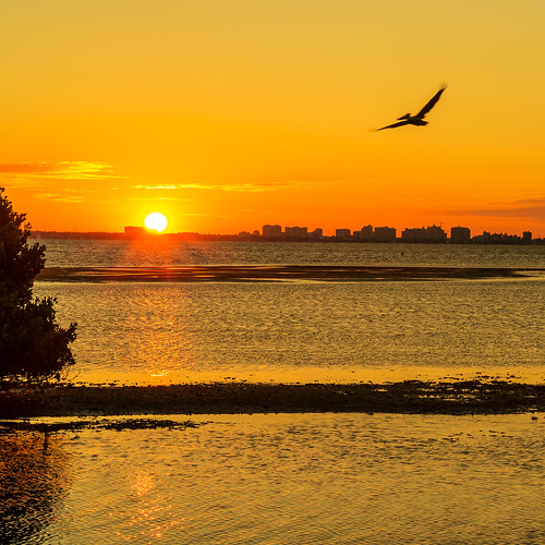 sky sunrise florida horizon pelican tidal longboatkey