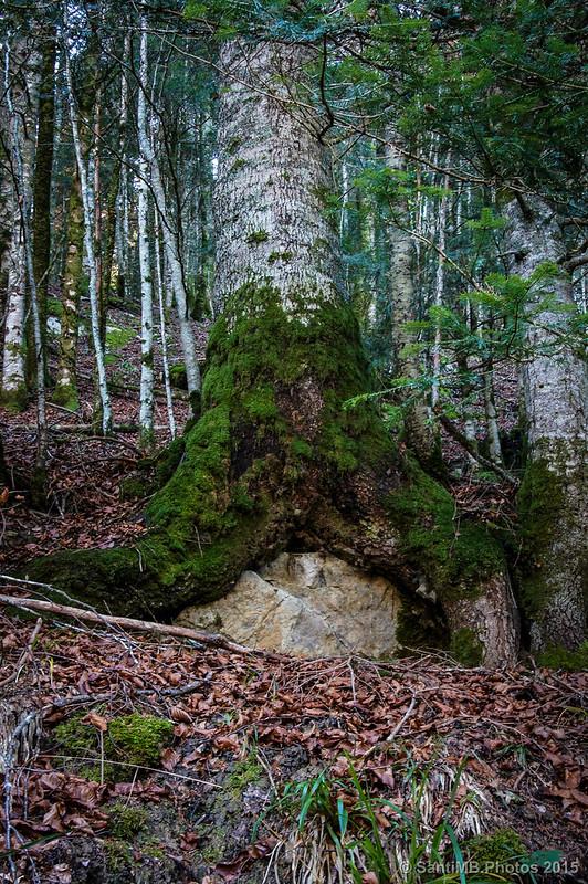El árbol que se cansó de esperar de pie