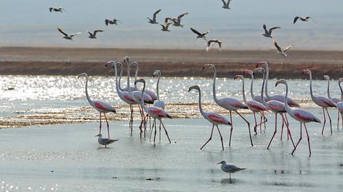 North of Eilat_  Salt Lakes_birds_1_Dafna Tal_IMOT | by Israel_photo_gallery