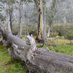 02 Viajefilos en Australia. Barrington NP 15