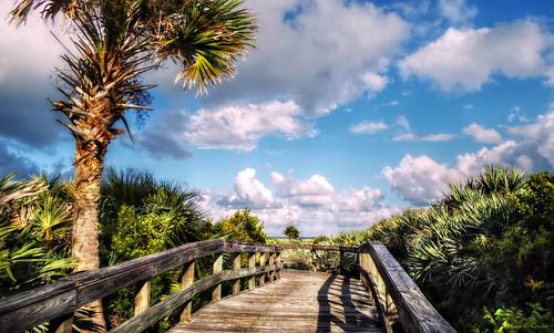 heavencamedown ponceinletflorida beachapproach walkway railing palmtree palmetto tropical florida daytonabeacharea clouds bluesky scenic nature outdoors park