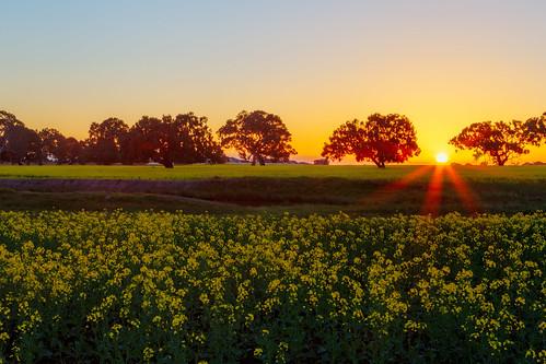 sunset australia melbourne canola greenvale