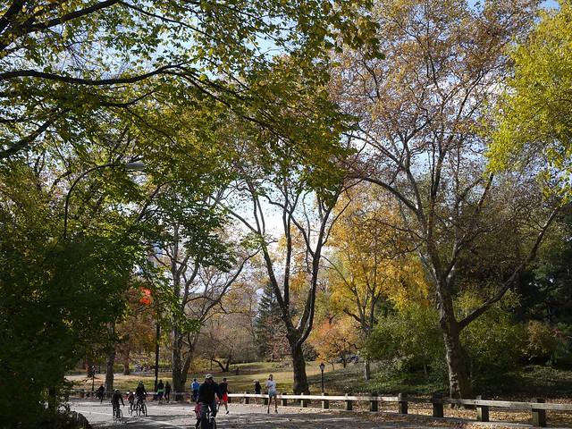 日, 2013-11-10 11:35 - Central Park