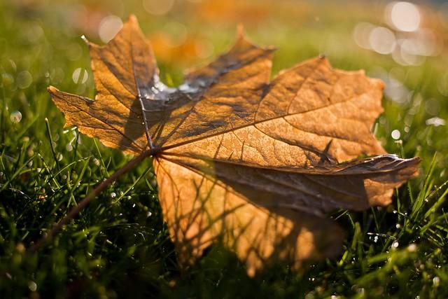 The Final Leaf