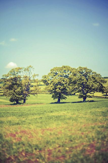 3 Tree Tilt Shift (Haselbury Countryside)