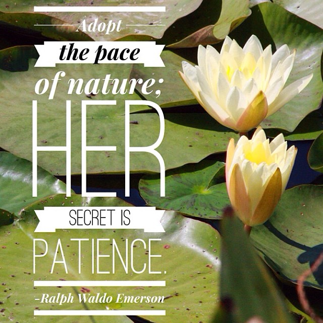 nature quotes flowers pond patience slowdown advice flickr
