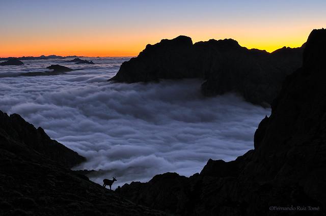 Siluetas entre la niebla