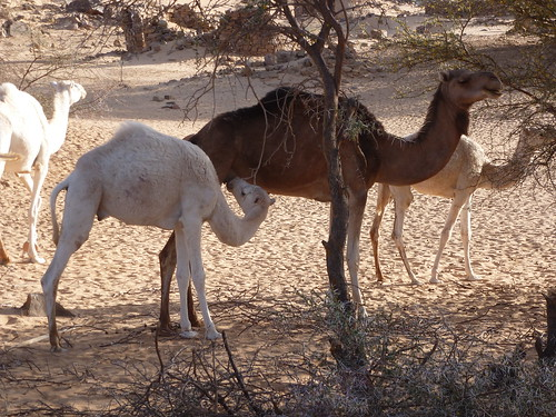 Mauritania | by linpicosarl
