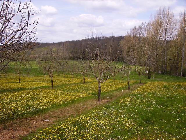 Arbustes et pré en avril