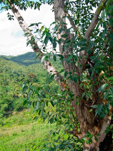 Madagascar5 - 022