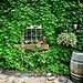 86/365 Vignoble Domaine Côte d'ardoise (Dunham QC)