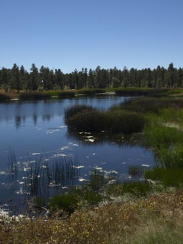 woodlandlake woodlandlakepark lakes nature pinetop pinetoparizona pinetoplakeside arizona geo:lat=34126252442797515 geo:lon=10995406463742256 geotagged riparian riparianzone riparianarea riparianhabitat