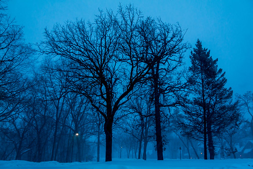 trees winter cold minnesota night landscape dawn is cloudy 1785mm xsi 1785mmis canonxsi pwwinter